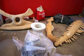 dinosaurs-sayaka-yamamoto
